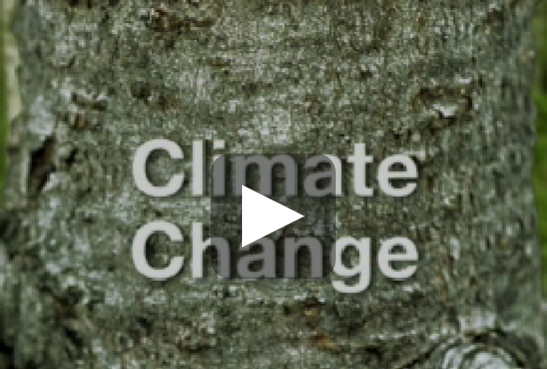 Natural Resources Canada video - Forestry and Climate Change