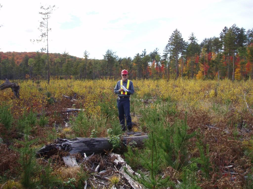 Independent Auditor assesses jack pine regeneration