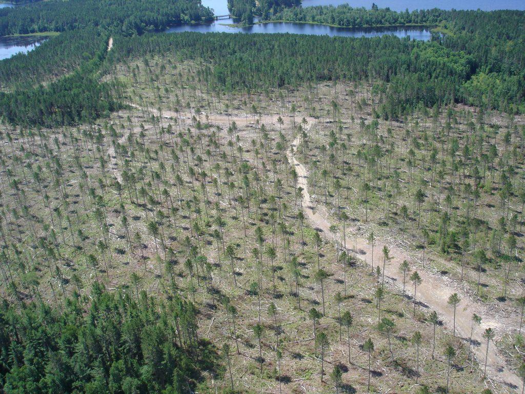 Pr seed tree aerial #2