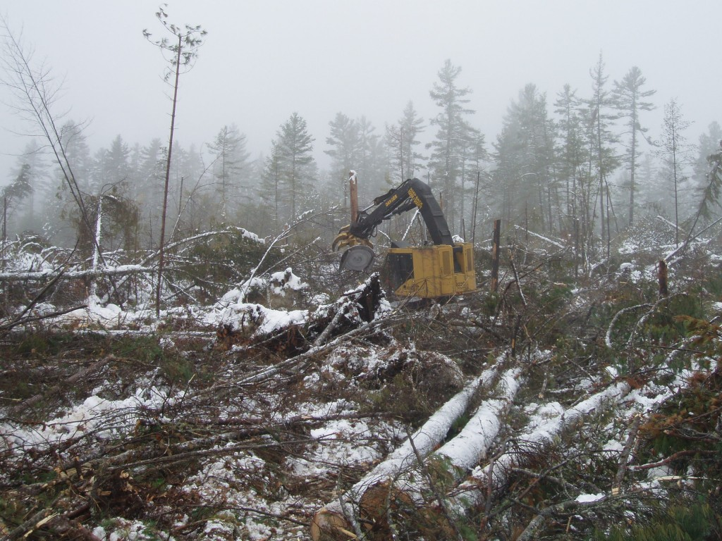 Salvaging blowdown