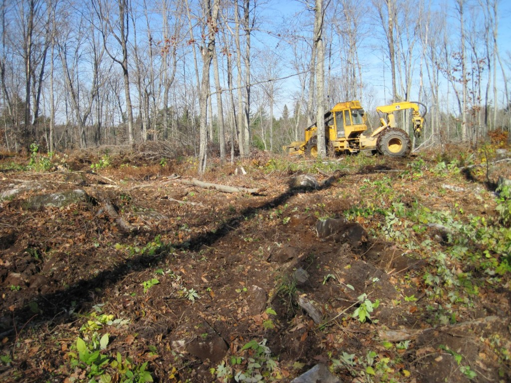 Site preparation in hardwood group openings